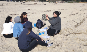 Students sitting at the beach having a discussion